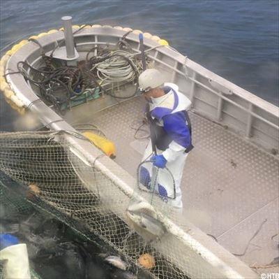 秋鮭漁獲_R.jpg