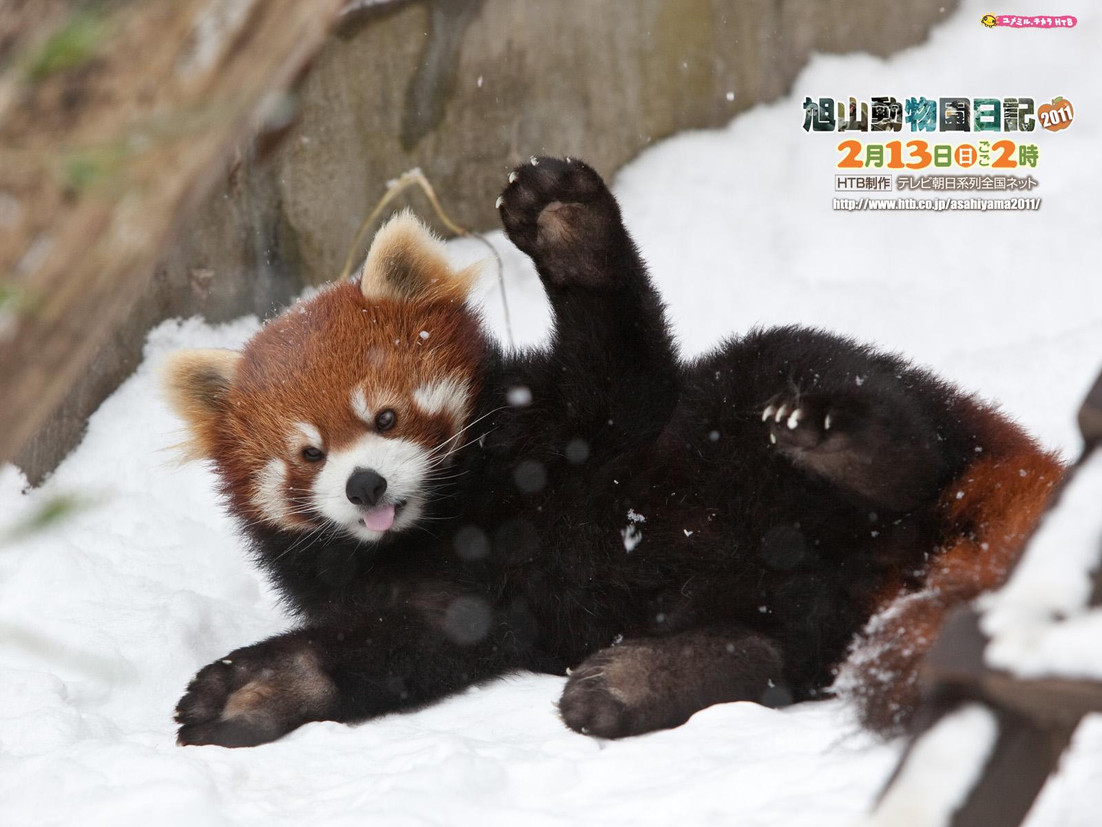 よゐこの旭山動物園日記2011