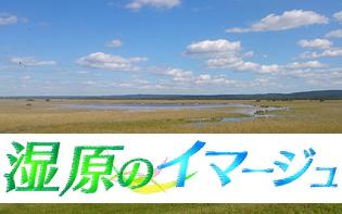 湿原のイマージュ ~HTB釧路支局発カメラマン日記~