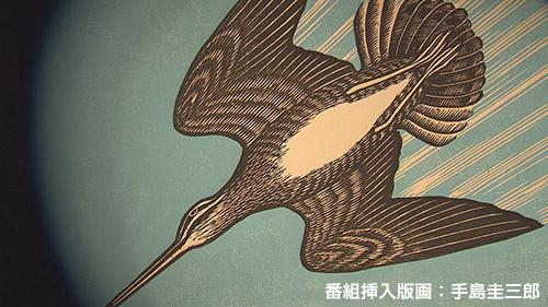 カムイの鳥の軌跡 ~オオジシギ 2つの物語~