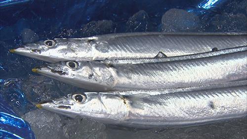 秋刀魚が消えた サンマのまち