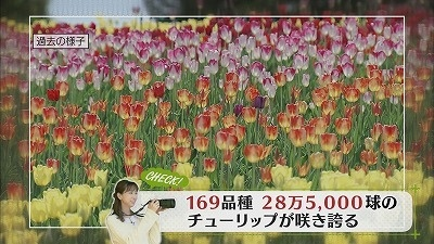 oh!写真部  新緑の森に咲く「山野草の女王」とは?
