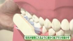 健康けっこう!調べ隊「歯と口の健康」